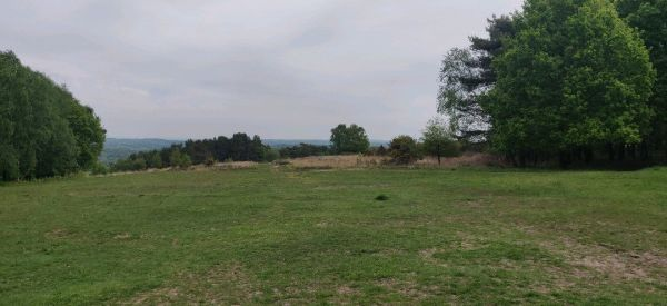 View of Ashdown Forest